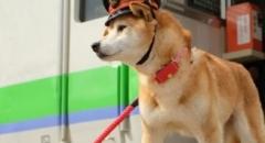 Kỳ lạ ở Nhật Bản - Chó, mèo và tôm hùm trở thành trưởng ga