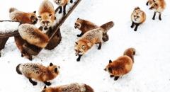 3 Hòn đảo thú cưng đáng yêu ở Nhật Bản