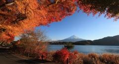 7 Điểm ngắm lá phong đỏ mùa thu Nhật Bản