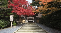 Wakayama nơi tâm linh đặc biệt ở Nhật Bản