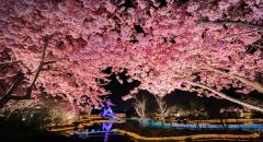 Mãn nhãn với lễ hội ánh sáng Nabana No Sato