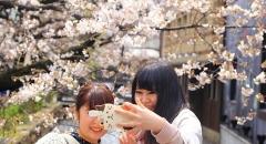 Văn hóa ngắm hoa anh đào của người Nhật