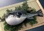 Sự thật về sở thích ăn cá nóc của người Nhật